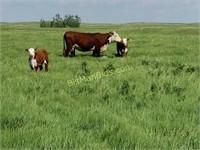 Local, Farm Raised Beef