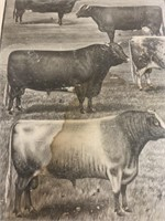 Canada's Ideal Portraits of Noteable Shorthorns