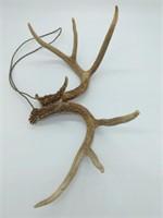 2pc. Deer Antlers