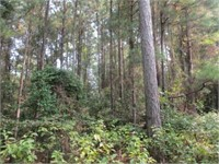 Timberland - Dallas Co. 40 Acres & Cleveland Co. 30 Acres