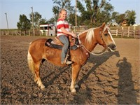 Anderson Equine November 14th
