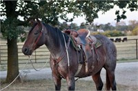 Heritage Livestock's Fall Catalog Sale