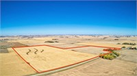 195 Acres m/l in Buena Vista County Selling in 2 Tracts