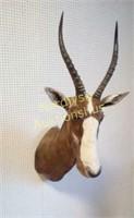 Varia auktion. Torsdag 29. oktober kl. 17.
