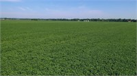 229.6 acres of cropland