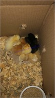 Small Animal Online Auction 10-30-20