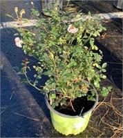 Plants and More Closing November 6th