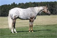 Ocala Horse Sale November 6-7