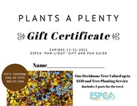 Deciduous Tree and Planting