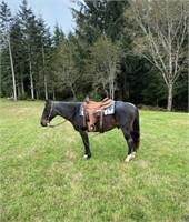 November Horse Auction