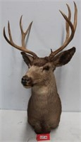 Taxidermy, Antiques, Meat Processing & More Online Auction