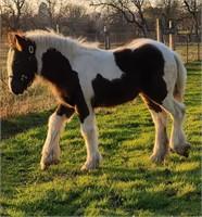 December Horse Auction