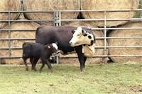 Chester Farms | Pen 2