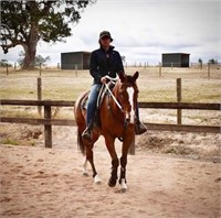 AWC ONLINE: (AUSTRALIA WIDE) HORSE & SADDLERY AUCTION