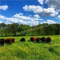 Farm - 164 acres near Carters Creek Pike - Maury Co