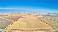 80 Acres m/l in Buena Vista County, Iowa