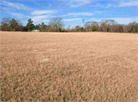 Athens, TX Land Auction
