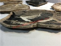 Decorative Petrified Wood