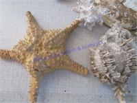 SEA SHELLS-STARFISH
