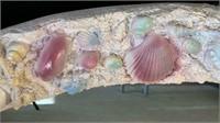 Under The Sea Wall Art