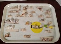 Sea Shell Assortment from Various Countries