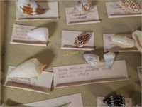 Small Sea Shells from Various Countries