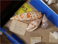Tortoise Sea Shells and More from Large Collection