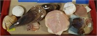 Collection of Unique Sea Shells