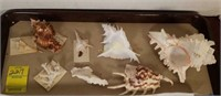 Sea Shells from China and More