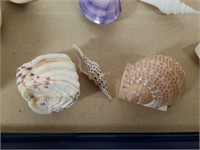 Colorful Sea Shells from Large Collection