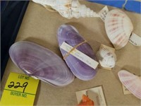 Colorful and Unique Sea Shells from Collection