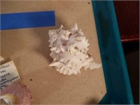 Sea Shells from Large Shell Collection