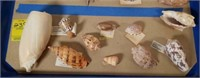 Unusual Sea Shells from Large Collection