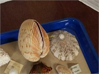 Assorted Sea Shells from Large Collection