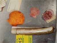Colorful and Unusual Sea Shell Collection
