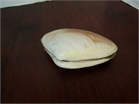 Red Abalone Sea Shell and More