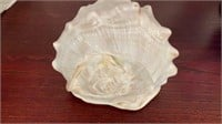 Lightning Whelk Conch Shell and More