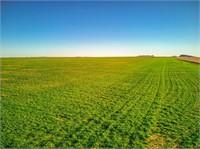 ±160 Acres, Kiowa County, Oklahoma - Tract #5