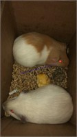 Small Animal Online Auction 1-22-21