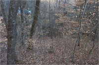 East Tennessee Woodland For Sale at Auction