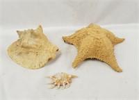Large Shell & Star Fish Nautical Lot