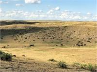 3,480± Acres Morrill County Land Auction- Bronderslev Estate