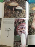 "NATURE BOOKS, ""THE FISHES, MAPS, MUSHROOMS"