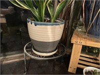 5 Pcs. Live Plants in Planters