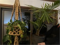 Hanging Live Plant and Palm in Planter