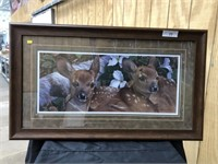 Signed Print of White Tailed Deer