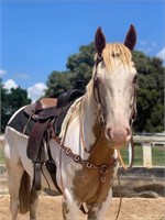 AWC ONLINE: ONLINE HORSE & SADDLERY AUCTION (AUS WIDE)