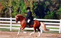 2021 Westfalen Stallion Service Auction