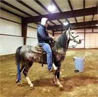 4j HORSE AUCTION 2021