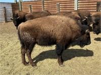 Jerry Farlee Buffalo Auction